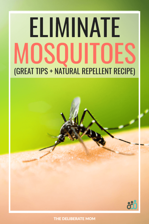 Tips To Fight Mosquitoes Homemade Mosquito Repellent