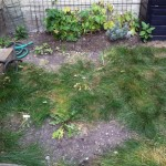 This Space – My Garden Redo