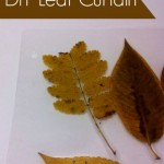 Nature Study – Autumn Leaf Curtain