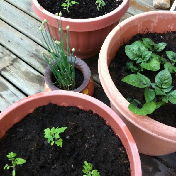 #100happydays - gardening