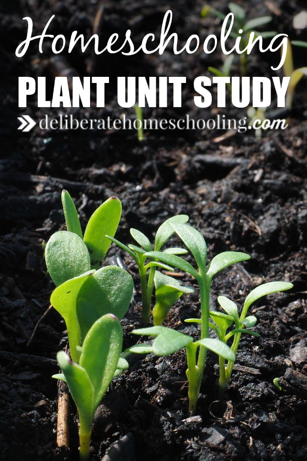For our grade four science, I created my own plant unit study for our homeschool. From notebooking, to books, to field trip ideas... check out all of these educational (and fun) ideas!